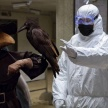 Число заболевших коронавирусом в России на 8 апреля 2020 составило 7517