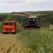 В Татарстане 19 районов приступили к кормозаготовке