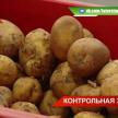 В Татарстане в подорожании картофеля обвинили перекупщиков